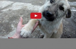 Howl of a Dog Rescue Videos