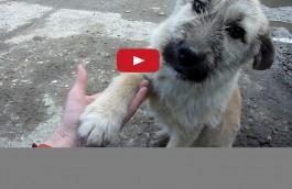 Rescue videos