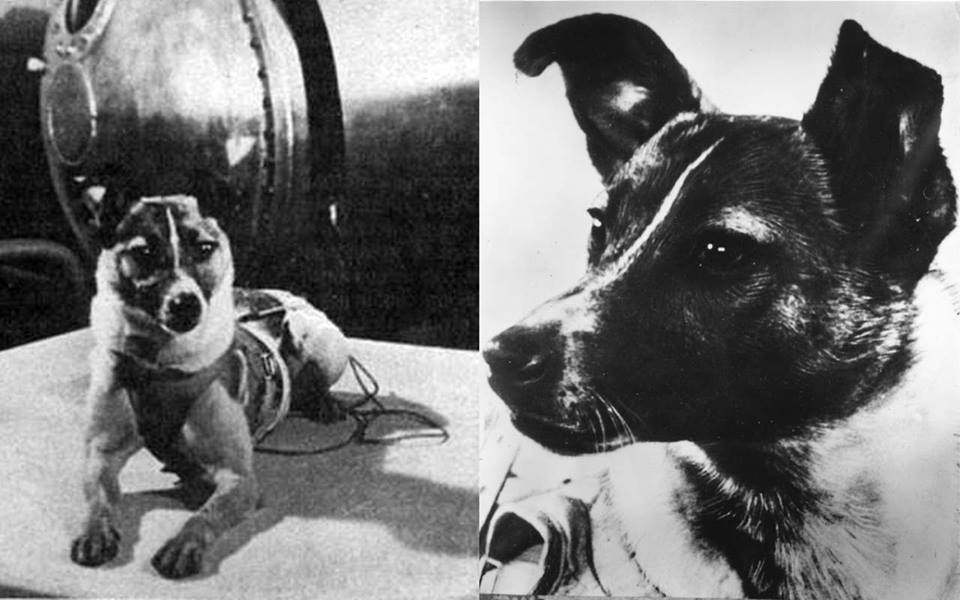 Laika The Dog A Sacrifice To Science On A One Way Mission To
